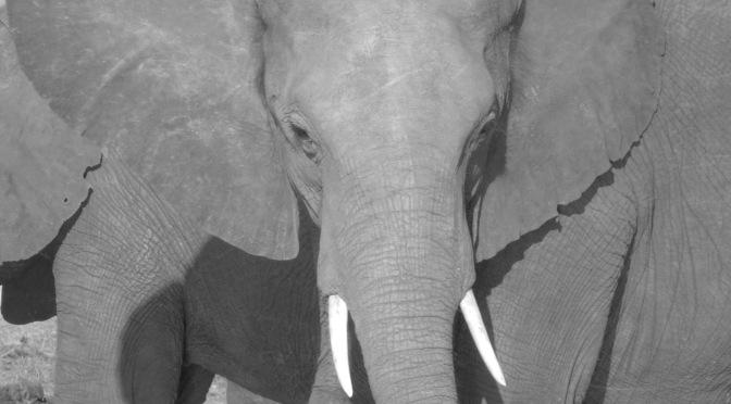 Falling in love with elephants