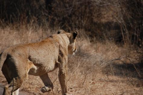 Africa2 1227