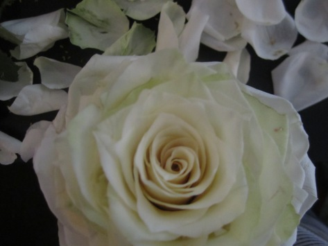 Flowers061