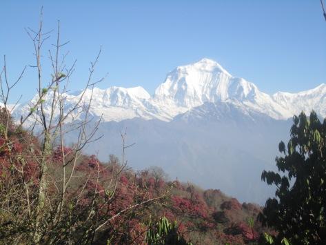 Nepali441