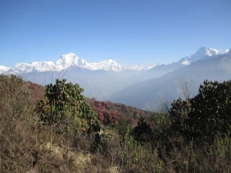 Nepali451