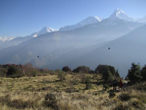 Nepali460